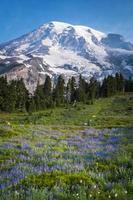 schöne Wildblumen und Berg regnerischer