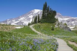 Sommerwiesen des Mount Rainier foto