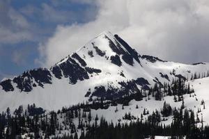 schneebedeckter Berg regnerischer Nationalpark Washington foto