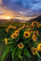 schöner Sonnenaufgang und Wildblumen am Rowena Crest Viewpoint, Oregon foto