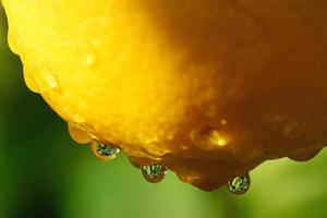 Zitrone mit Regentropfen foto