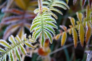 Frost auf kleinen grünen Blättern