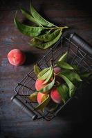 Pfirsiche auf Zweig foto