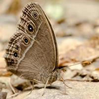 Schmetterling. Campingverbot krang foto