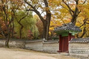 Herbstbäume und koreanisches traditionelles Tor und Wand foto
