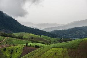 grünes terrassiertes Reisfeld foto