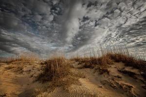 Stranddünen foto