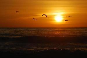Kalifornien Sonnenuntergang foto