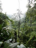 nebliger Regenwald foto