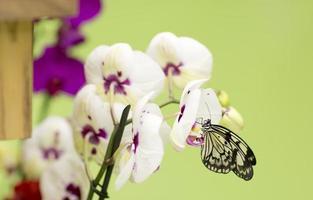Schmetterling sitzt auf einer Blume. foto