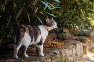 schöne weibliche Katze foto
