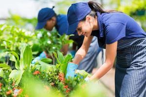 weibliche Baumschularbeiterin, die Pflanzen schneidet foto