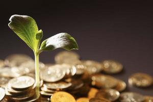 Geld wächst foto