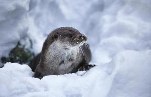 Otter foto