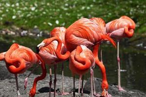 schöner rosa Flamingo.
