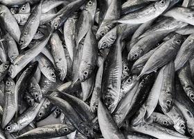 Fischhintergrund foto
