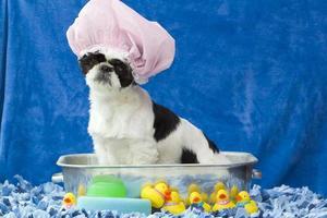 Welpe in einer Badewanne. foto
