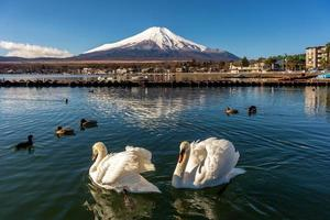 Schwan und Fuji foto