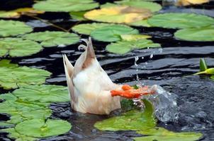 sich unter der Oberfläche ducken foto