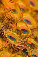 abstrakter Hintergrund der Pfauenfedern foto