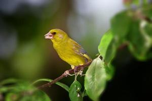 beschäftigter Vogel foto