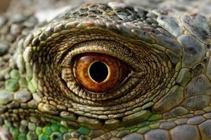 grünes Leguanauge foto