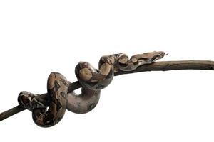 Schlange foto