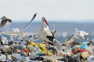 Vögel auf der Müllkippe foto