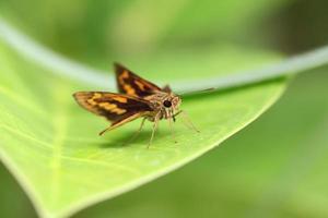 braunes Insekt auf grünem Blatt.