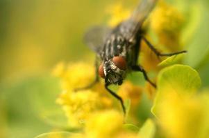 auf einer Blume fliegen foto