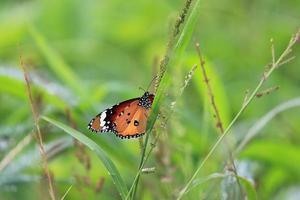 bunter Schmetterling foto