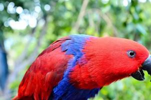 tropischer Papageienvogel