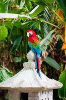 Papageienkakadu foto