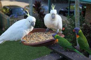 Sie sind glückliche Vögel foto