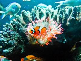 tropischer Fisch foto