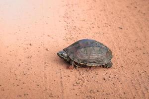 Schildkröte auf dem Boden. foto