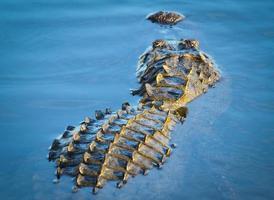 Gator zurückziehen