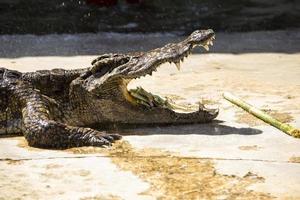 Krokodil in Thailand foto