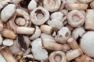 Pilze kochen