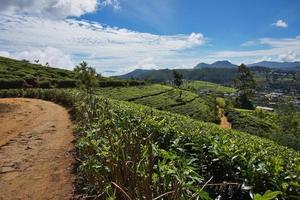 Nuvaraelia, Sri Lanka, Buschtee, Ceylon, foto