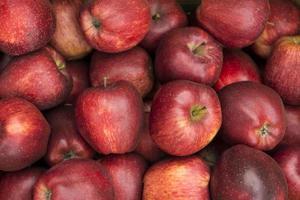 Nahaufnahme von roten königlichen Galaäpfeln foto