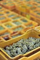 Schachteln mit Trauben im vertikalen Foto im Vordergrund