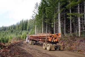 Holztransporter mit Ladung foto