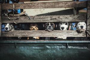 Hunde im Rücken foto