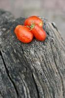 Tomaten auf einem Baumstamm