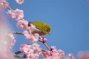 grüner Vogel foto