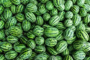 viele grüne süße Wassermelonengruppe foto