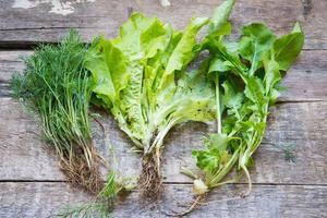 Fenchel, Salat und Rucola auf einem hölzernen Hintergrund