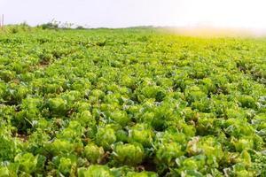 chinesischer salat bei phu tubberk