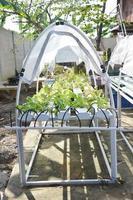Anbau von Bio-Gemüse oder ungiftigem Gemüse foto
